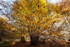 Colours of Abruzzo in Autumb. Autumn to Abruzzo - Colours with leaves yellow Royalty Free Stock Photography