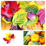 Colours of autumn stock images