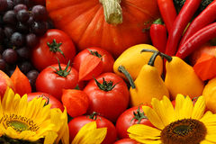 Colours of autumn. Tomatoes, pumpkins and flowers in colours of autumn royalty free stock photo