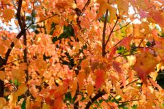 Colours of autumn stock photo