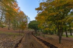 Colours of autumn. In South Africa Royalty Free Stock Image