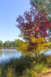 Colours of autumn Stock Photos