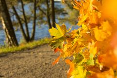 The colours of autumn. Enjoying the colours of an autumn afternoon royalty free stock photos