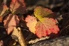 The colours of autumn stock photo