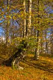 Colours of autumn in a forest at sunny day, Radocelo mountain Royalty Free Stock Photos