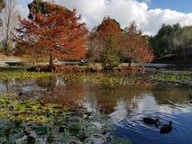 The colours of Autumn. Autumn colours at the lake Stock Photos