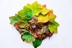 Colours of Autumn Royalty Free Stock Images