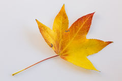 Colours of Autumn Royalty Free Stock Photography