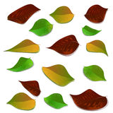 Colours of autumn. Leaves. Stock Image