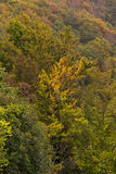 The colours of the forest in autumn. Image of the colours of the forest in autumn Stock Photography