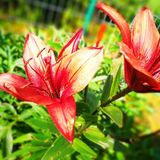 Colours in the garden. Artistic look in vintage vivid colours. Royalty Free Stock Photography