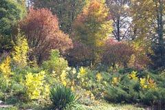 Colours jesień Obrazy Stock
