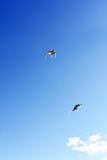 Colours kites , Royalty Free Stock Photos