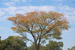 COLOURS OF THE LEAVES ON A TREE CHANGING IN AUTUMN IN THE AFRICAN BUSH. View of a yellowing tree against a cloudy sky in Africa at the end of summer stock photo