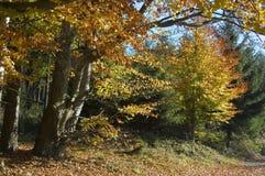 colours lyckligt blankt Royaltyfri Foto