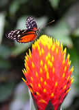 Colours of the nature. A colorful butterfly sitting on a flower Stock Image