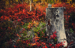 Colours of nothern nature. Autumn in the north of Russia different colours make nice view royalty free stock photography