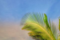 Tropical palm tree leaf stock images