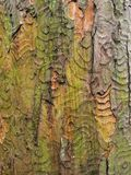 Colours and patterns in the bark of an old tree Stock Images