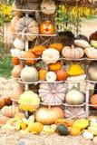 Colours Pumpkins Stock Photos