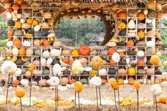 Colours Pumpkins Stock Image