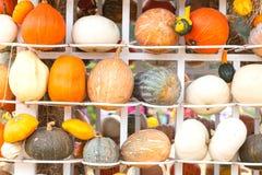 Colours Pumpkins Stock Images