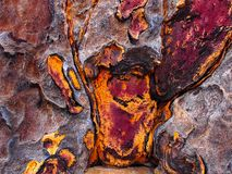 Close up of the bark of a quiver tree. The colours range from vivid orange to purple brown. The trees grow in Namib desert royalty free stock image