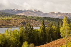 Colours of Scotland. Colorful scottish landscape in spring, Loch Lochy shore Royalty Free Stock Photo