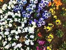Colours, spring and flowers royalty free stock photos