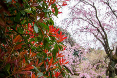 Colours of spring at Shinjuku Gyoen,Tokyo,Japan Royalty Free Stock Image