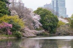 Colours of spring at Shinjuku Gyoen,Tokyo,Japan Stock Image