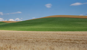 Colours of tuscany. Simple lines and geometry in the tuscany Royalty Free Stock Image