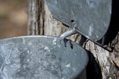 Colpetto dello sciroppo di acero Immagine Stock