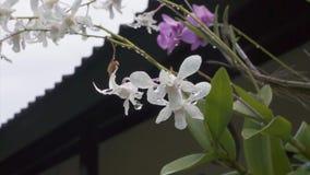 Colpi del vento da inseguire con molti fiori bianchi e viola coperti di gocce di pioggia archivi video