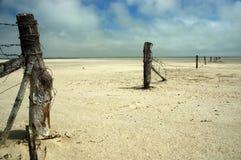 Colpito dalla siccità Fotografie Stock Libere da Diritti