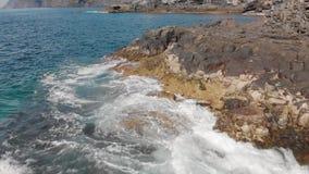 Colpo aereo Acqua del blu della superficie dell'oceano, del litorale e del turchese e linea costiera vulcanica delle pietre e del archivi video