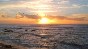 Colpo aereo del fuco degli uccelli profilati che volano davanti al tramonto al tramonto sopra la spiaggia nel Portogallo video d archivio