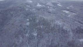Colpo aereo del legno nevoso stock footage