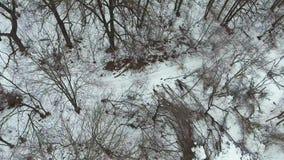 Colpo aereo del pareggiatore in cappotto giallo che corre nella foresta il giorno di inverno freddo video d archivio