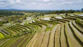 Colpo aereo della risaia dei terrazzi di Jatiluwih Fotografia Stock
