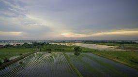 Colpo aereo: Giacimento del riso nella sera dopo il raccolto Fotografia Stock Libera da Diritti