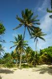 Colpo alto delle palme nella brezza Fotografia Stock