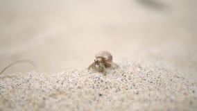 Colpo alto vicino di muovere il piccolo granchio, viaggia da qualche parte intorno alla spiaggia stock footage