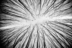 Colpo Artsy di un modello dell'albero fotografia stock libera da diritti