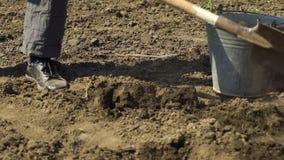 Colpo basso del pozzo di scavatura dell'uomo in suolo e del bambino che mette patata in  video d archivio