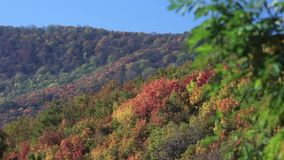 Colpo degli alberi su una montagna durante l'autunno video d archivio