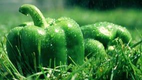 Colpo del movimento lento di acqua che è spruzzata sui peperoni dolci verdi stock footage