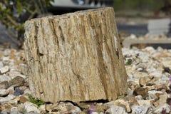 Colpo del primo piano di legno petrificato Fotografia Stock