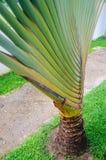 Colpo della banana Fotografia Stock Libera da Diritti