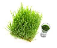 Colpo della bevanda dell'erba del grano su fondo Immagini Stock